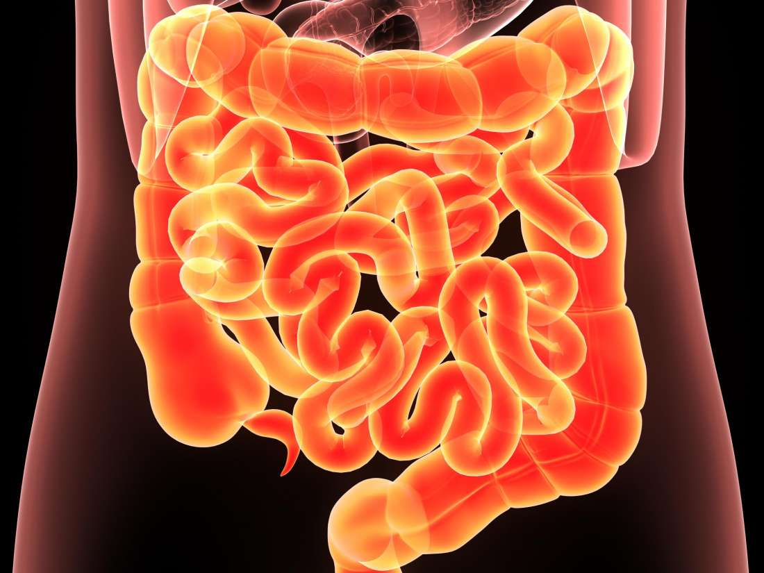 Was ist Clostridium difficile (C. difficile)?